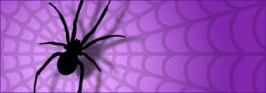 spider purple web