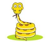 yellow python coiled